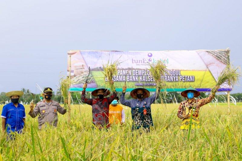 Bank Kalsel dukung petani Tala  melalui kemudahan akses KUR