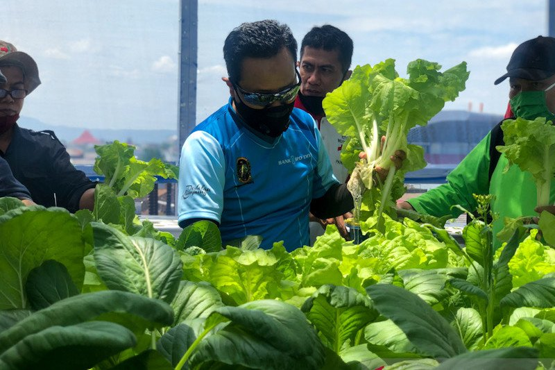SMP Piri Yogyakarta manfaatkan rooftop guna budidaya sayur hidroponik