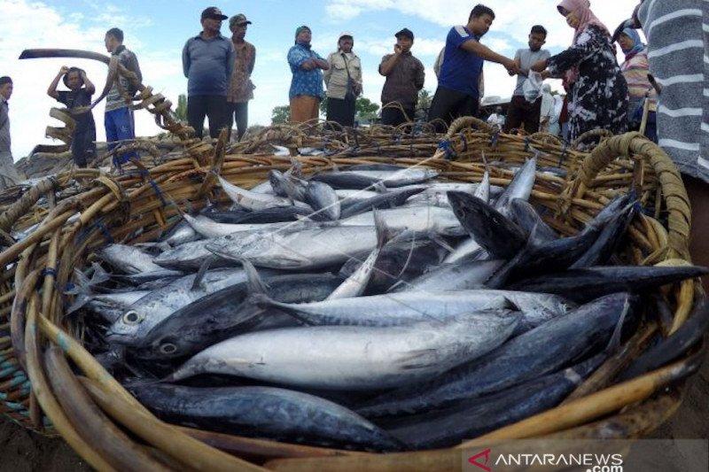 Ingin tingkatkan kekebalan tubuh makanlah ikan