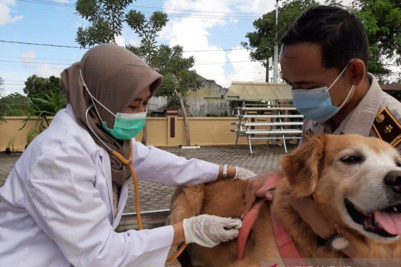 Provinsi Kepulauan Riau bebas rabies