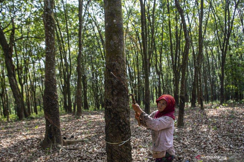 Kementerian PUPR Tambah Anggaran Pembelian Karet Alam Petani