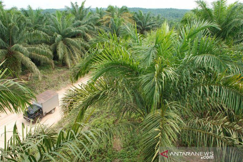 Indonesia-Belanda perluas kerja sama sawit kembangkan petani Kalimantan
