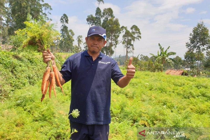 Pertamina gulirkan modal kemitraan bagi 38 petani hortikultura