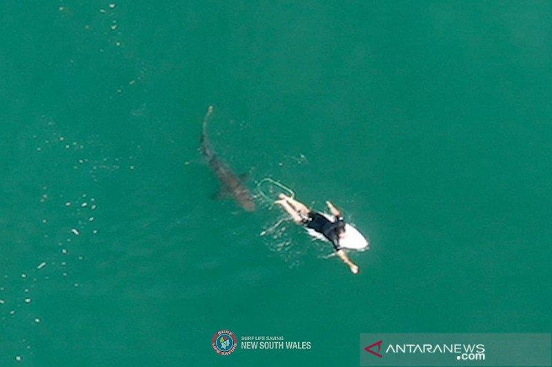 Seorang peselancar Australia hilang usai diserang hiu