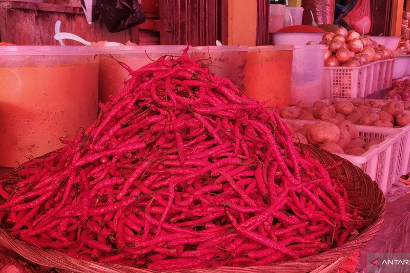 Red chili price begins to rise in Tanah Datar