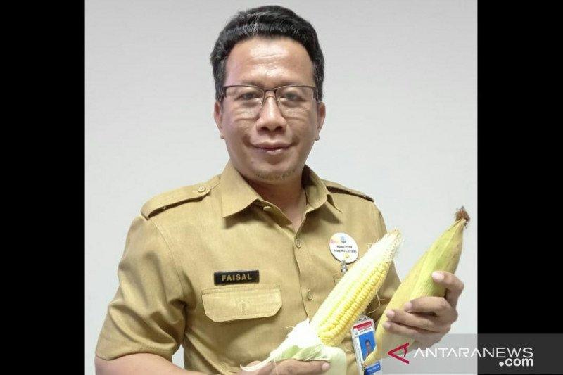 DPMPTSP Kaltara fokus pengembangan komoditas jagung