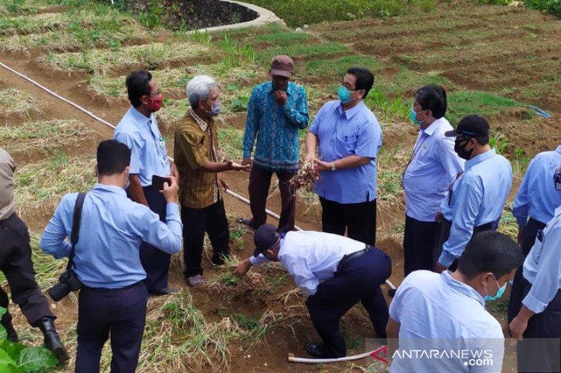 Pemkab Bantul menggali potensi pertanian Nawungan untuk agrowisata