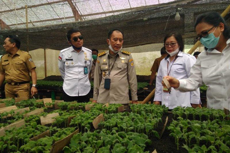 Bunga Krisan didorong menjadi komoditas ekspor baru ke Jepang