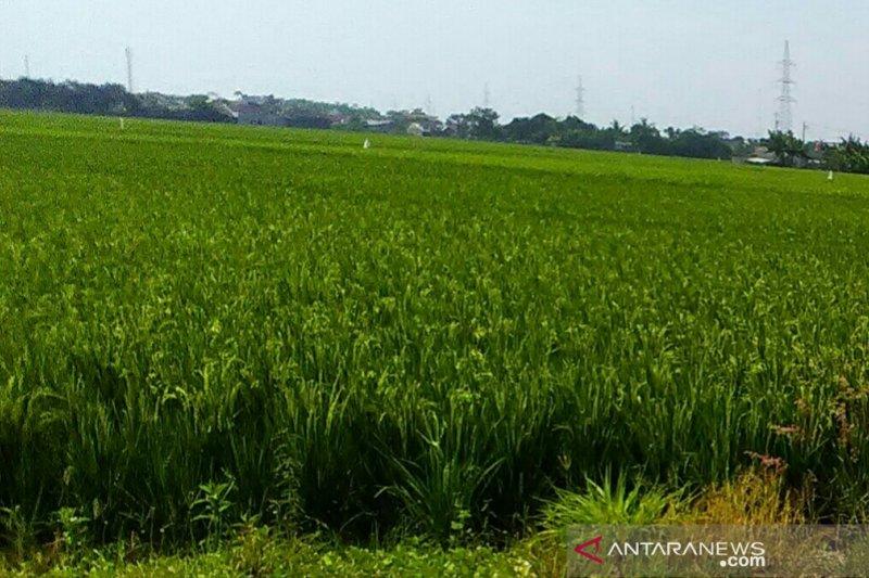 Dinas Pertanian Karawang sampaikan kelangkaan pupuk sudah teratasi