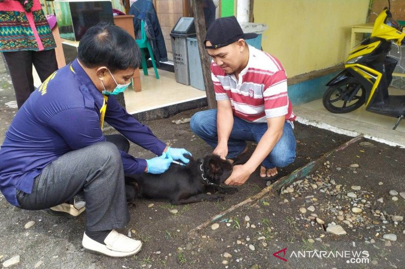 Guru Besar IPB: 26 provinsi di Indonesia endemik rabies