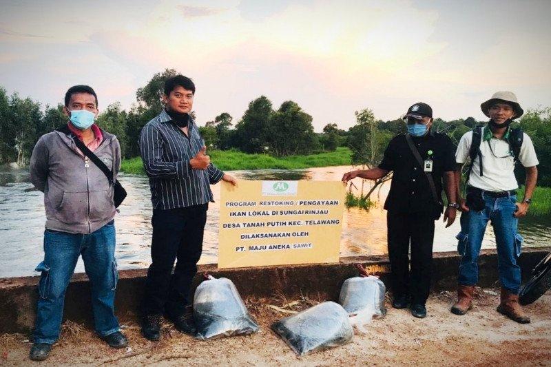 Dukung pelestarian, PT Maju Aneka Sawit lakukan 'restocking' ikan lokal