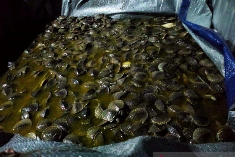 Gakkum KLHK Sulawesi gagalkan perdagangan 1.301 hewan langka