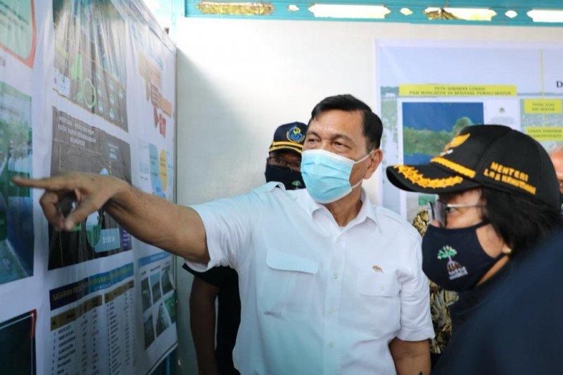 Luhut ingin melobi Eropa-UEA bantu program penanaman mangrove di Indonesia