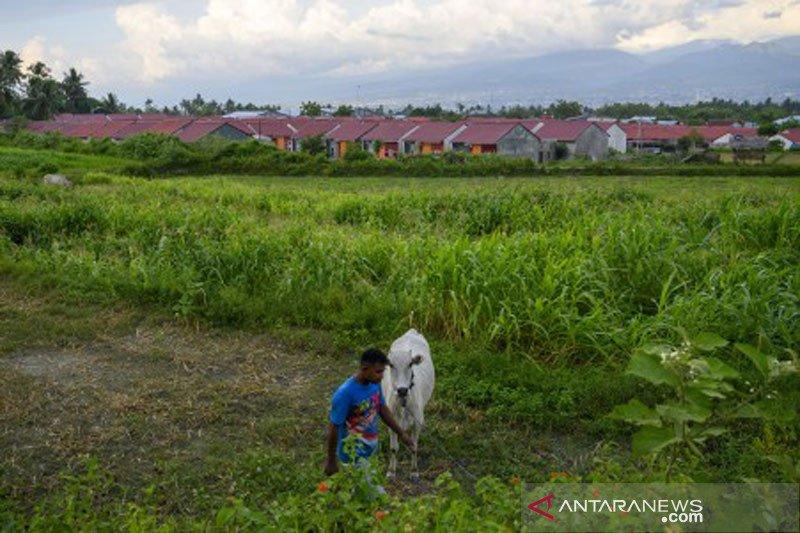 Penyusutan lahan pertanian oleh perumahan di Sigi