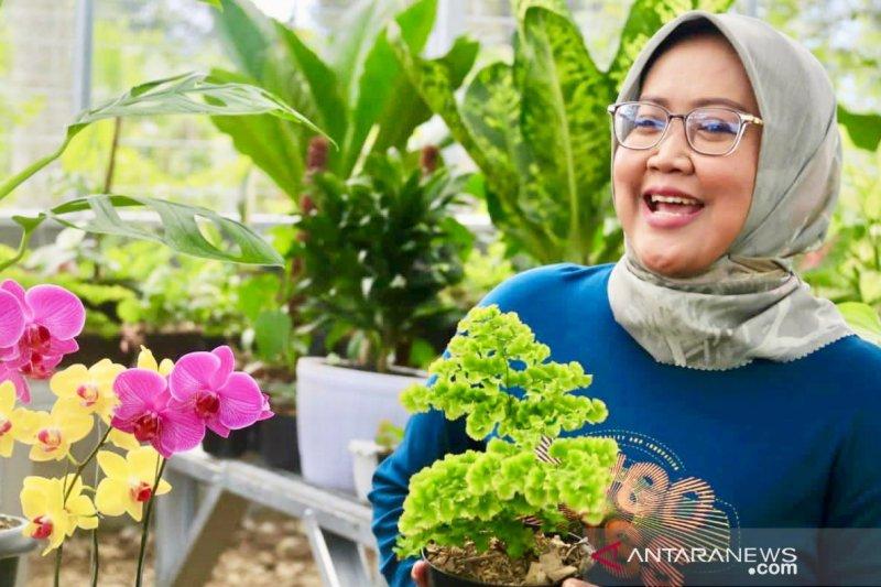 Omzet penjualan tanaman hias Kabupaten Bogor tembus Rp300 juta per hari