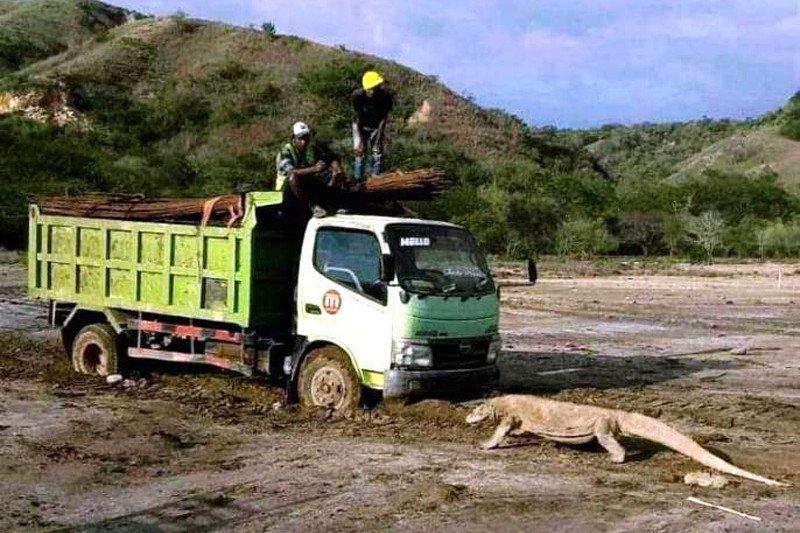 """DPR menyorot foto viral komodo """"hadang"""" truk di pulau rinca"""