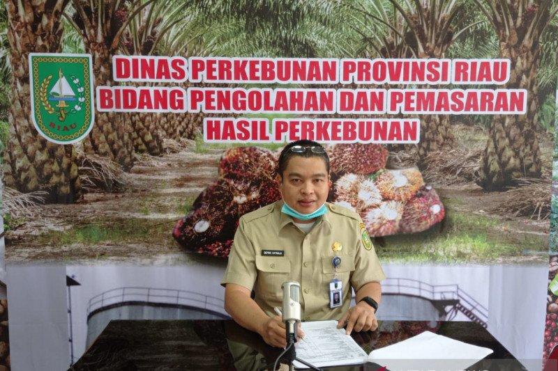 Harga sawit di Riau pekan ini turun