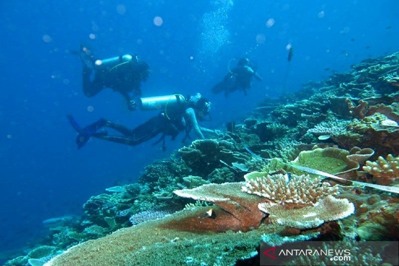 Planting coral could benefit coastal economies: Minister