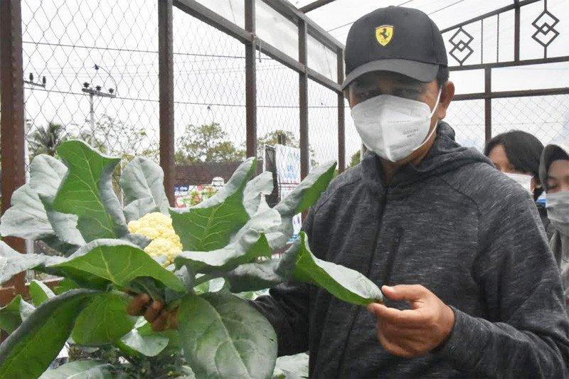 Bupati Barut apresiasi PKK manfaatkan lahan untuk tanam sayuran
