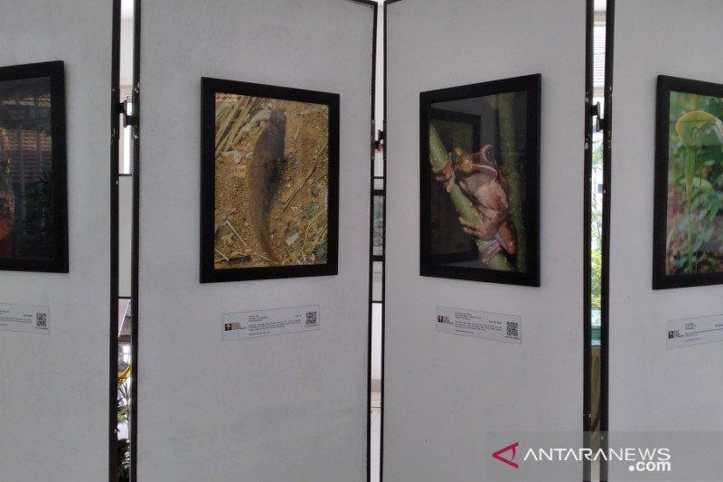 TN Gunung Halimun Salak pamerkan 50 karya foto puspa dan satwa langka