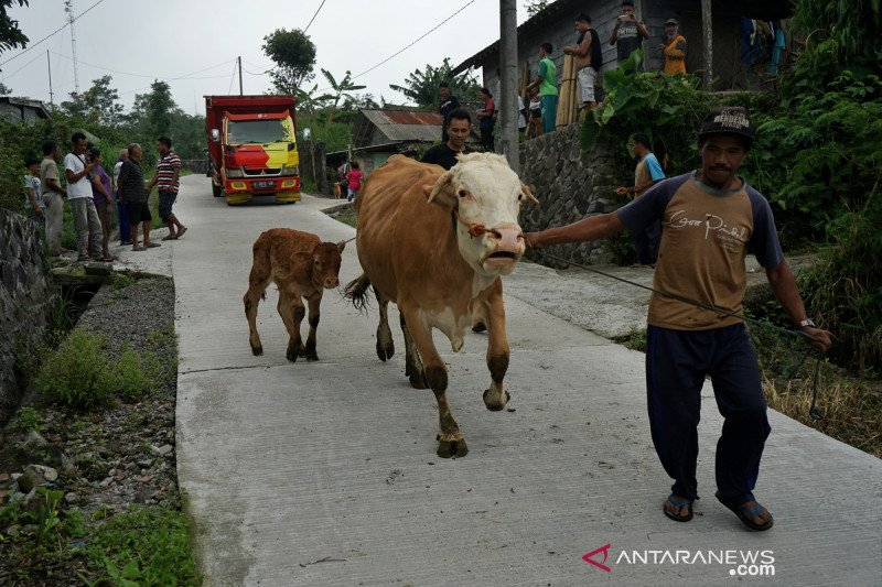 Locals urged to be vigilant while taking grass on Merapi's slopes, volcano's potential eruption