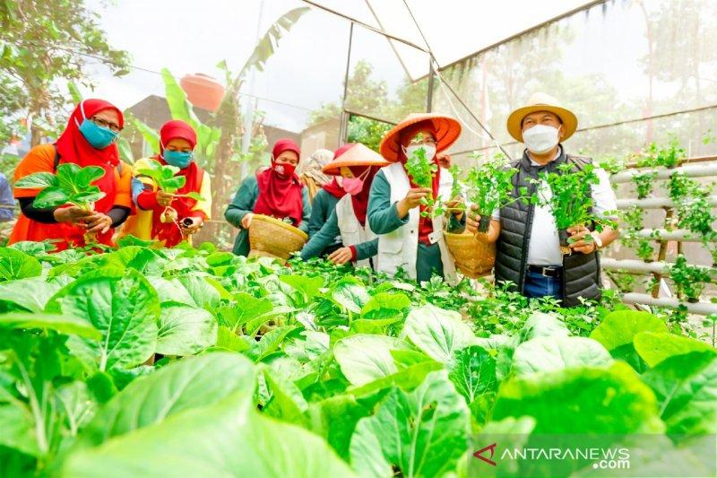 Pemkot Bandung dorong warga 'urban farming' antisipasi kerentanan pangan