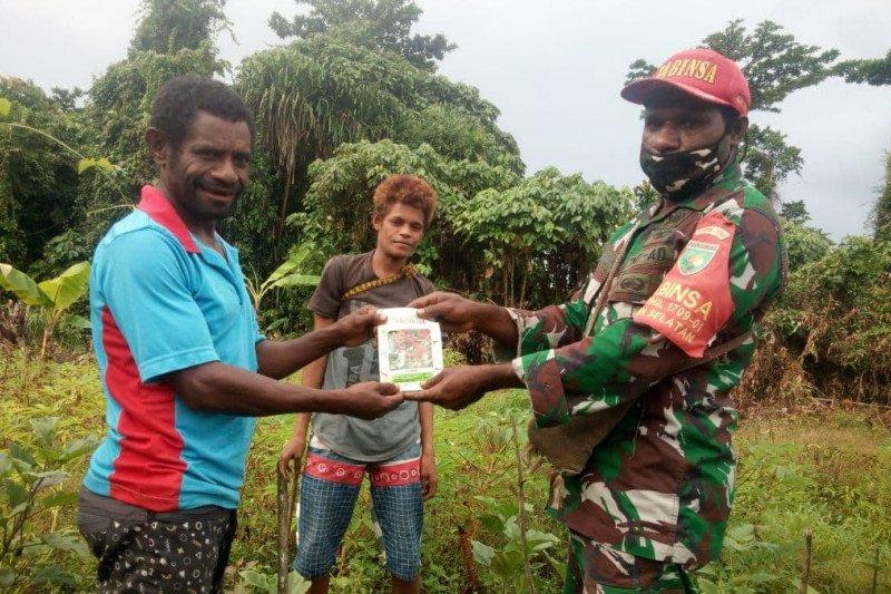Babinsa bantu bibit tomat petani kampung Kanawa Yapen