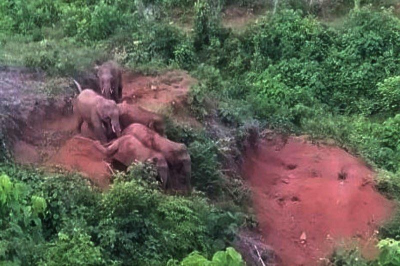 Menghalau gajah liar dari kawasan  permukiman warga