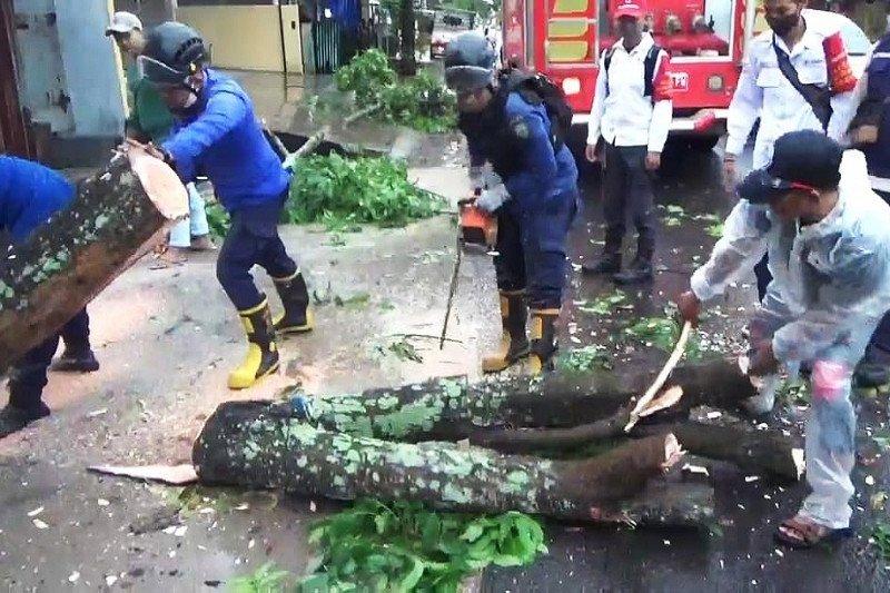 Pengendara jadi korban pohon tumbang di Sampit