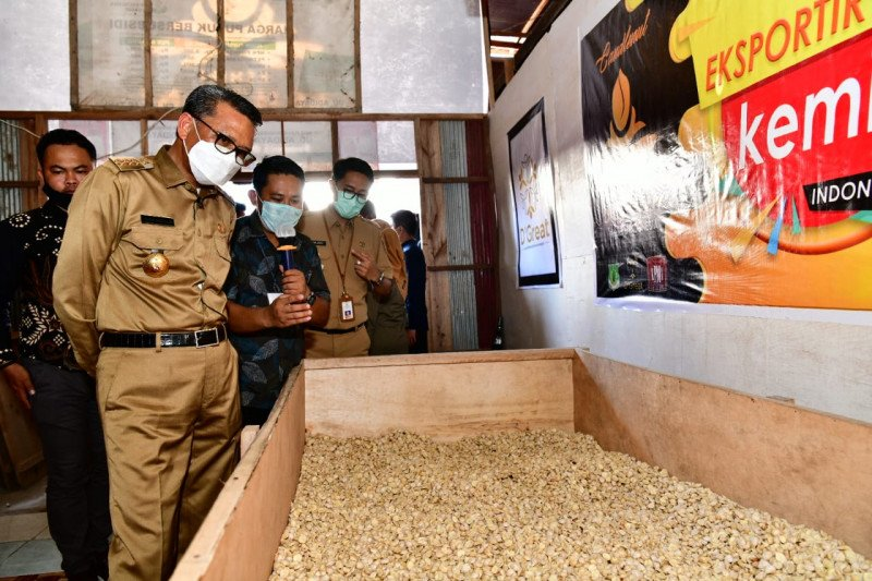 Pemprov Sulsel bantu 850 ribu bibit kakao bagi petani terdampak bencana