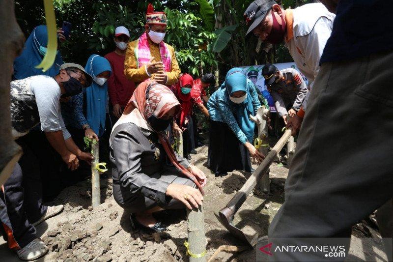 Warga Gowa tanam 10.000 pohon kelor untuk cegah stunting