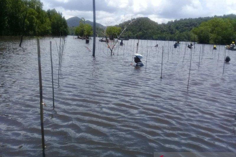 Balai Pengelolaan Hutan Lindung tinjau tanaman mangrove di Jayapura