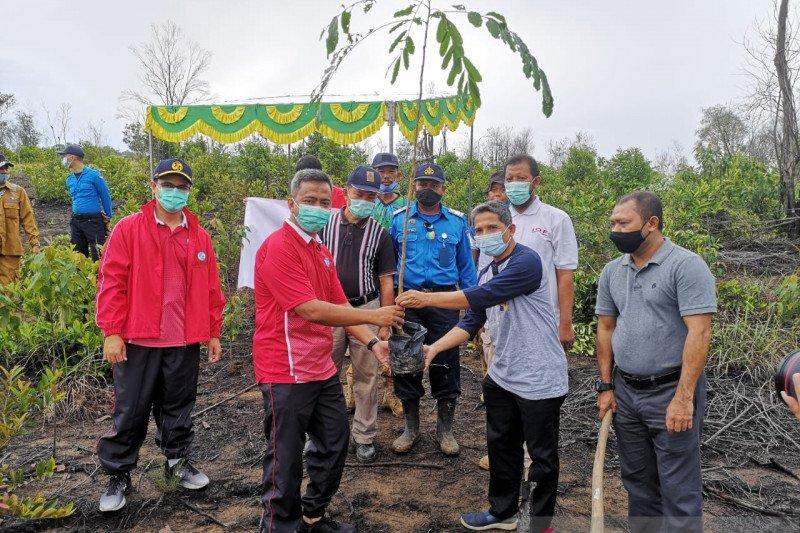 Jasa Raharja dan BP Batam jaga hutan lindung dengan penghijauan