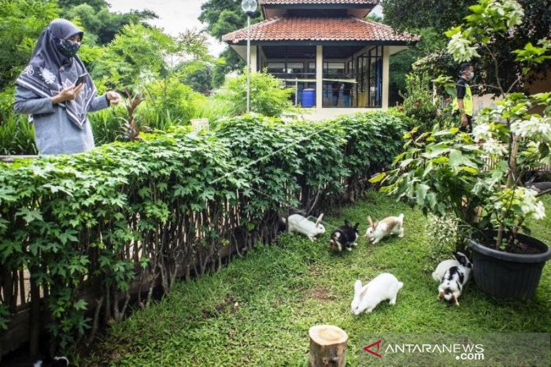 Taman Kelinci Bambu Apus