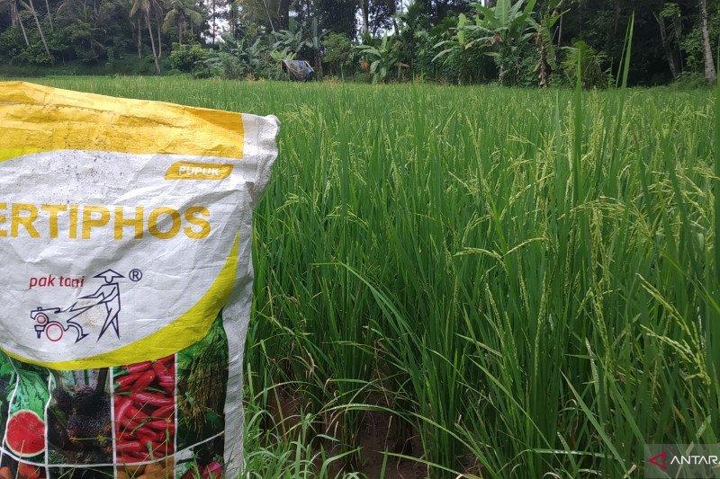 Pemkab Tanah Datar awasi pendistribusian pupuk dan obat-obatan pertanian