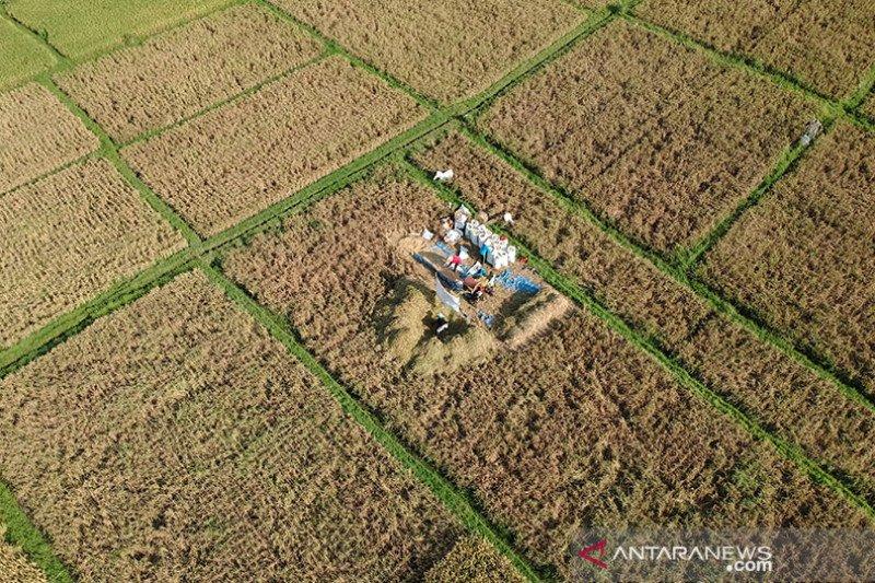 Daya beli petani Sulut alami peningkatan