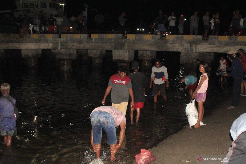 Warga Lembata ramai-ramai tangkap ikan hidup di pesisir