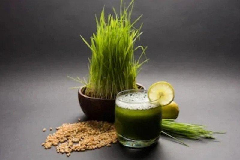 Ini manfaat minum jus rumput gandum setiap pagi