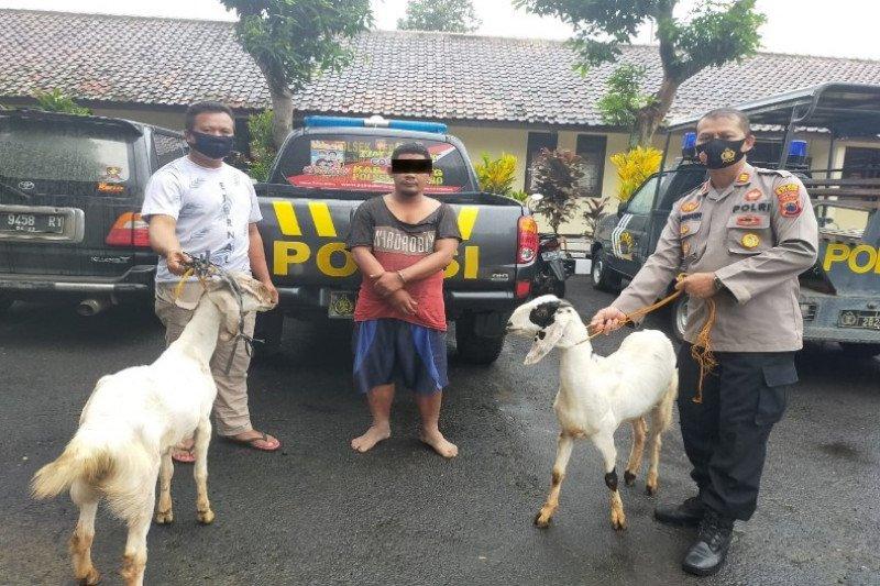 Polres Batang ringkus tersangka pencurian hewan ternak