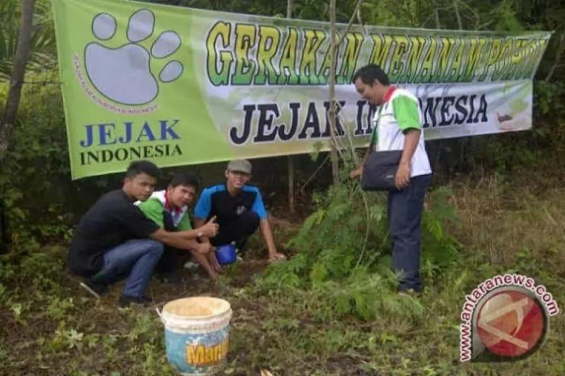 Jejak Indonesia lestarikan  pohon langka damar mata kucing