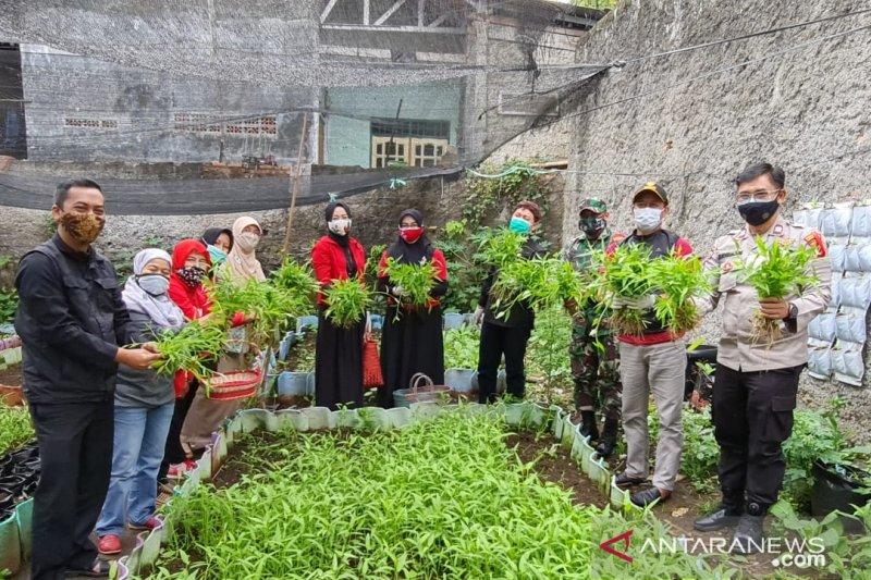 Kepala DKPP Kota Bogor dan warga bersama panen sayuran di Kelurahan Babakan