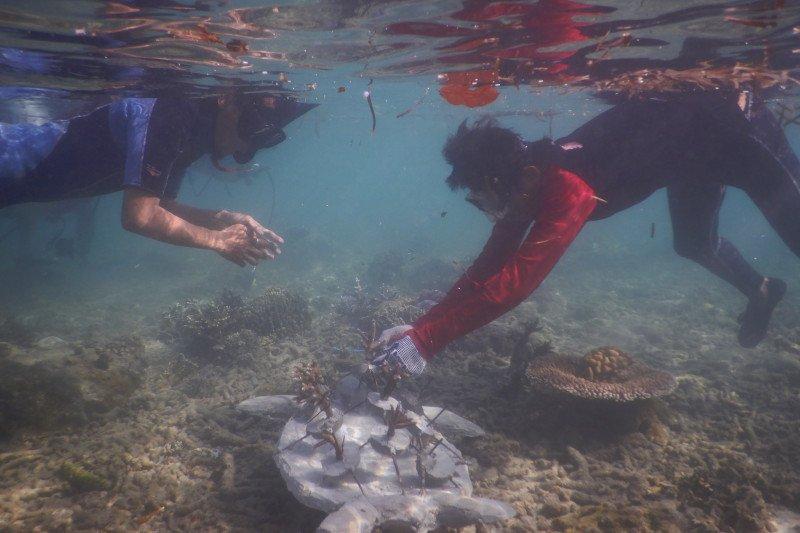 Kisah perburuan penyu hijau  di Pulau Enggano