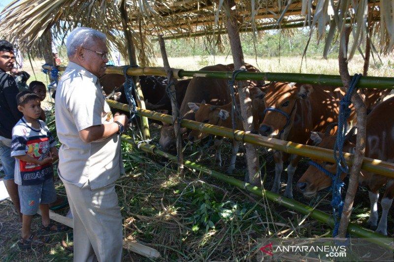 Populasi ternak sapi di NTT tembus 1 juta ekor