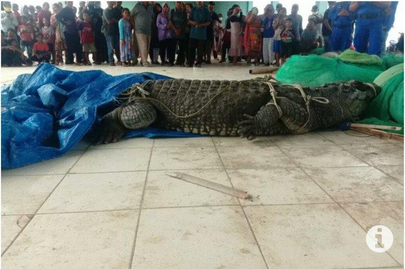 Nelayan tangkap buaya besar di Pantai Kuala Penet