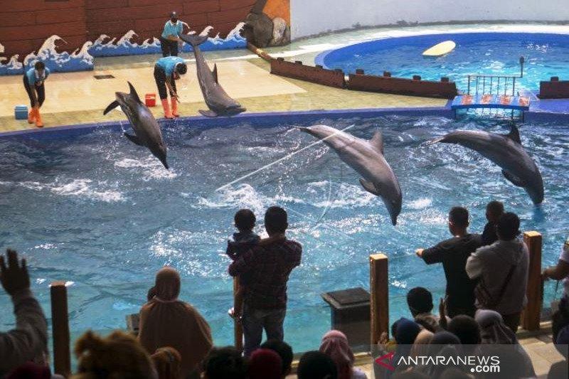 Wisata Batang Dolphin Center