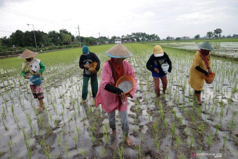 KTNA Jawa Barat minta pemerintah daerah segera terbitkan SK pupuk subsidi