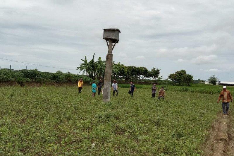 WCS ajak petani manfaatkan burung hantu kendalikan hama tikus di sawah
