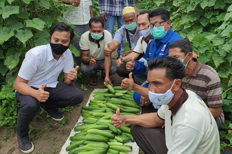 PT CPI - BRGM produktifkan lahan gambut tanpa bakar