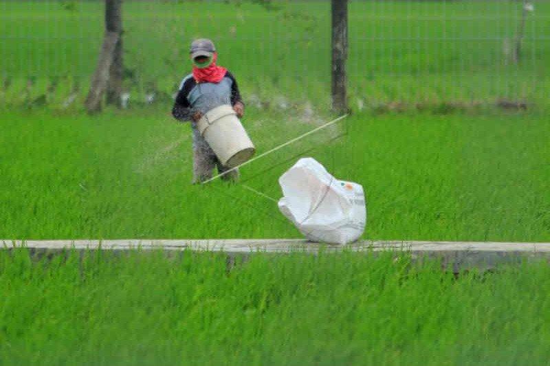 Dinas Pertanian Cirebon sebut kelangkaan pupuk akibat distribusi terkendala