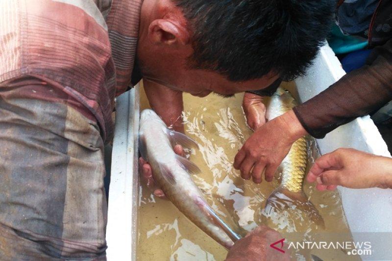 Targetkan produksi ikan air tawar Solok Selatan naik, tapi belum cukupi kebutuhan
